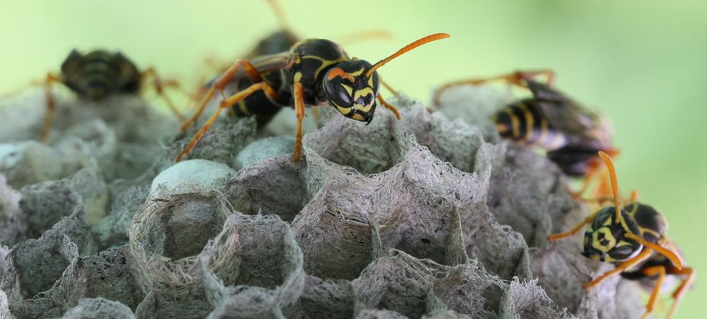 Insektenbekämpfung
